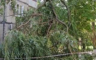 Как спилить дерево, которое находится за территорией частной собственности?