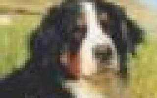 Правомерны ли действия хозяев проданной собаки?