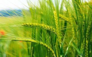 Производство и реализация продукции растениеводства